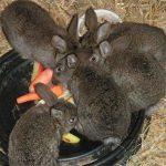 Tiere im Strafvollzug